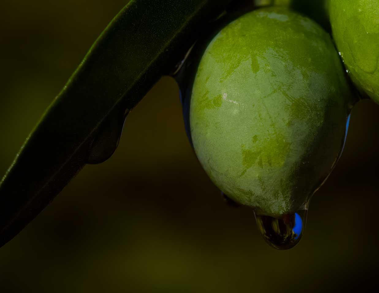 huile olive 100 % bio